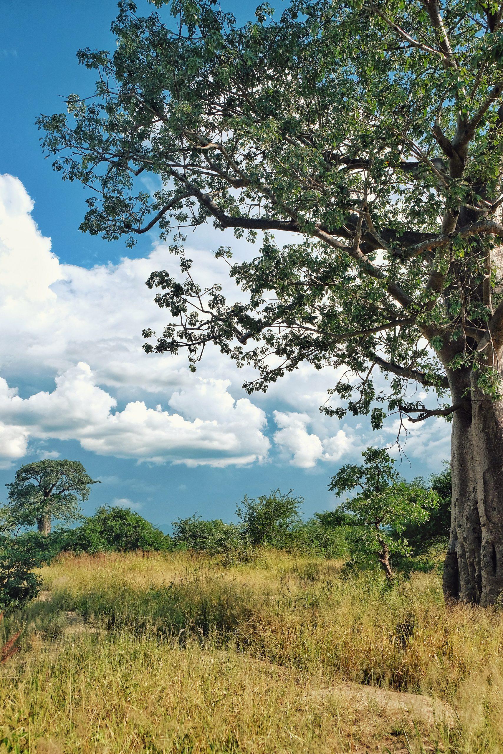 AFRIKA MALAWI